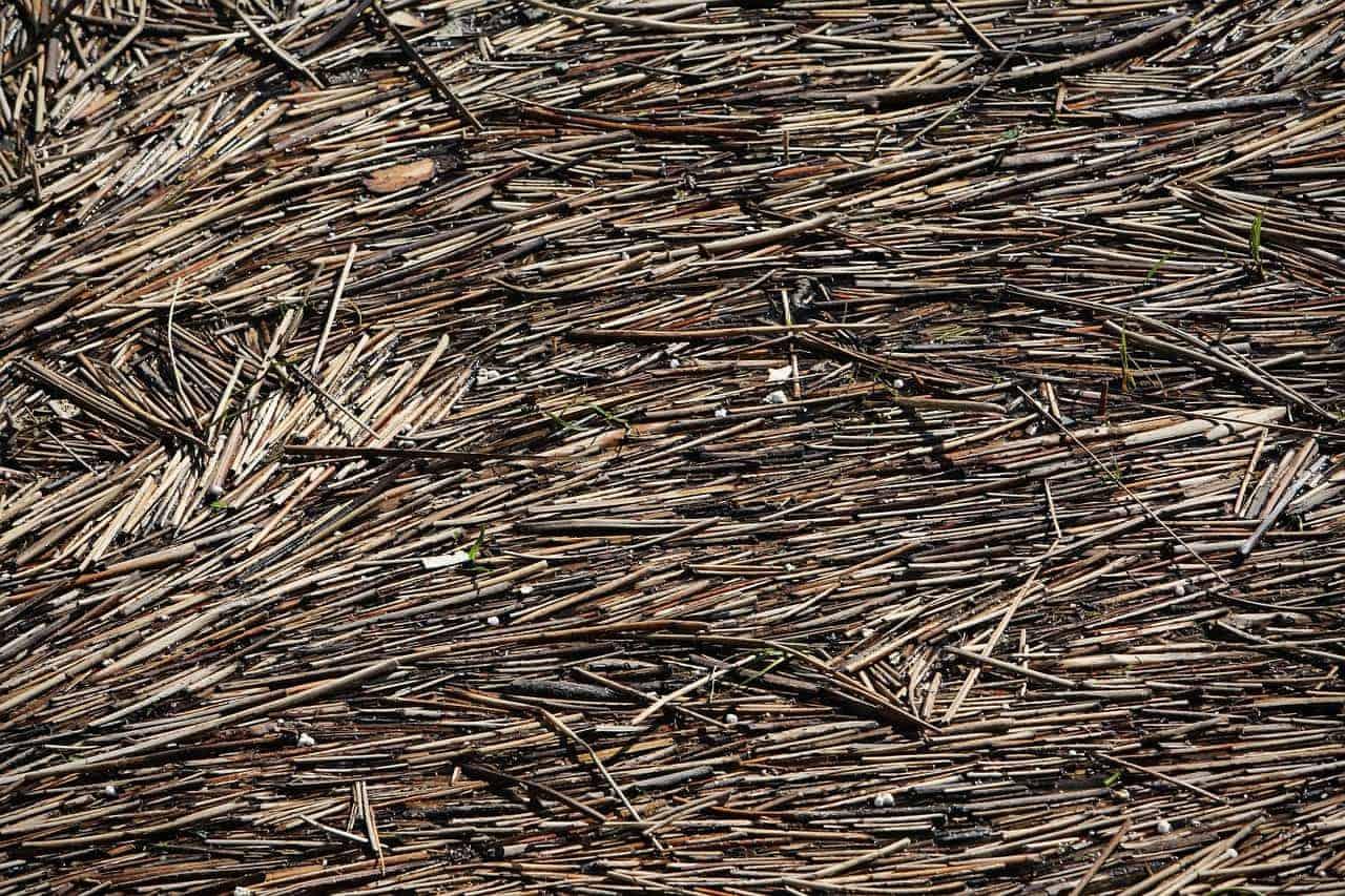 wood-406963_1280